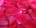 Hot Pink Watermelon Fresh Rose Petals Wedding 250