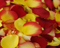 Yellow and Red Fresh Rose Petals Wedding 2000