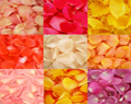 Assorted Colors Fresh Rose Petals for Wedding 3000