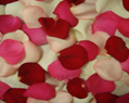 Valentine Mix Fresh Rose Petals Wedding 500