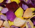 Tropical Mix Freeze Dried Rose Petals Wedding 1lb
