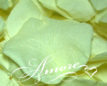 Light Green Pistachio Freeze Dried Rose Petals Wedding 1lb