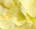 Light Yellow Freeze Dried Rose Petals Wedding 1lb